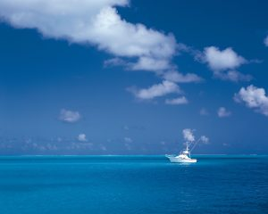 Blue Ocean Strategy volgens CatchYourTalent